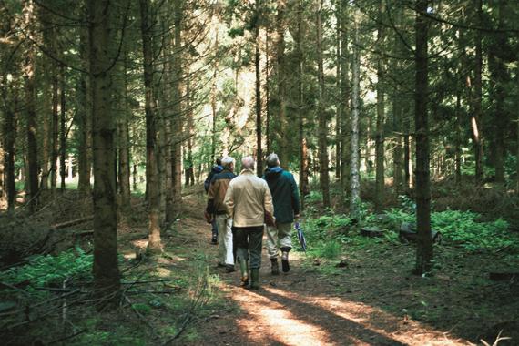 Oostermaat bosbouwwerkbezoek